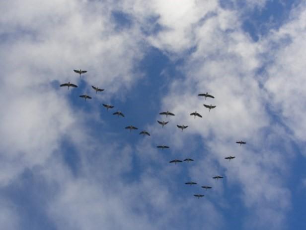Selitev ptic