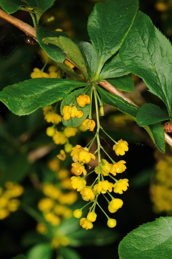Rastline se odzivajo na dražljaje