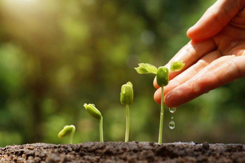 Rastline rastejo